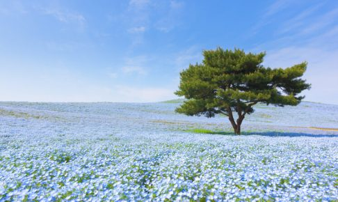 茨城県 看護師 転職サイト
