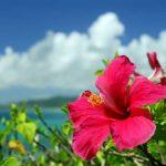 看護師 転職サイト 沖縄